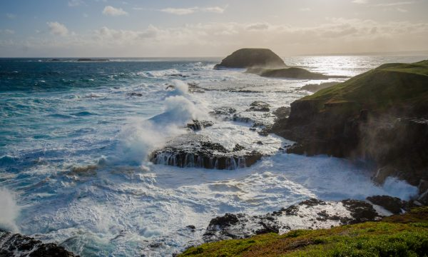 phillip island tour explores the nobbies boardwalk coastal region