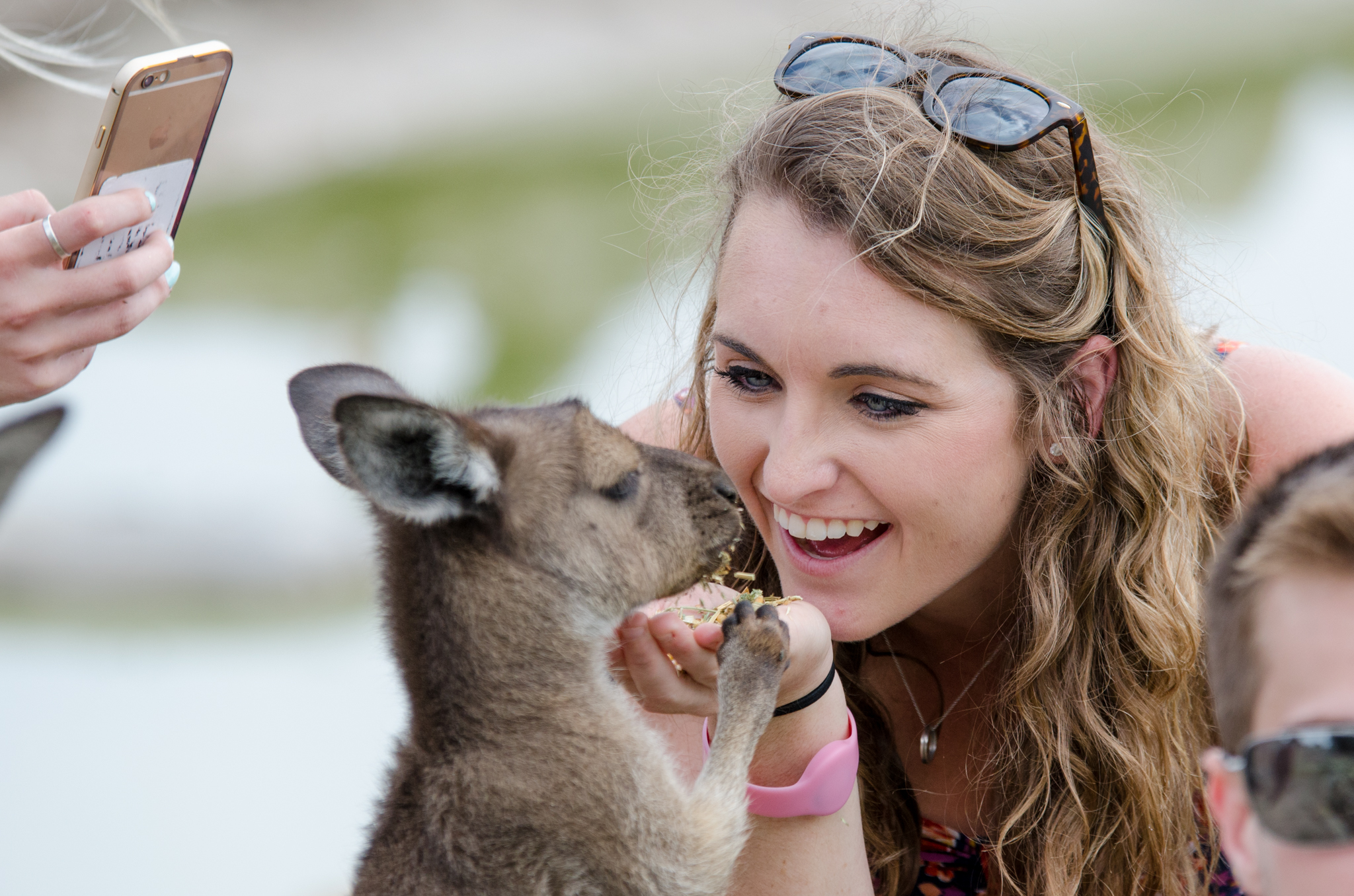 phillip island tour visits maru native wildlife park