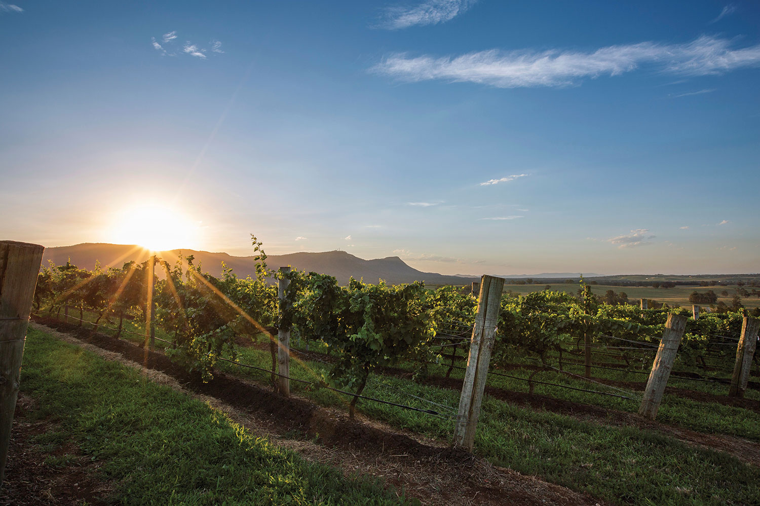 Soak up your surrounds and celebrate a beautiful day before returning from your hunter valley wine tour