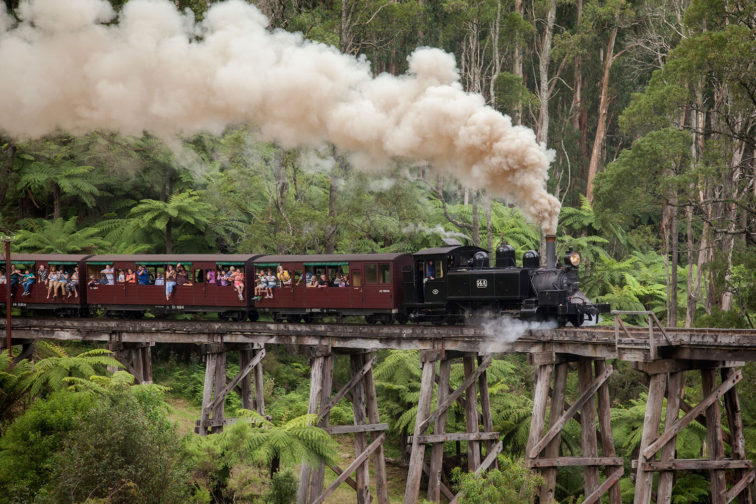 puffing billy tour 2