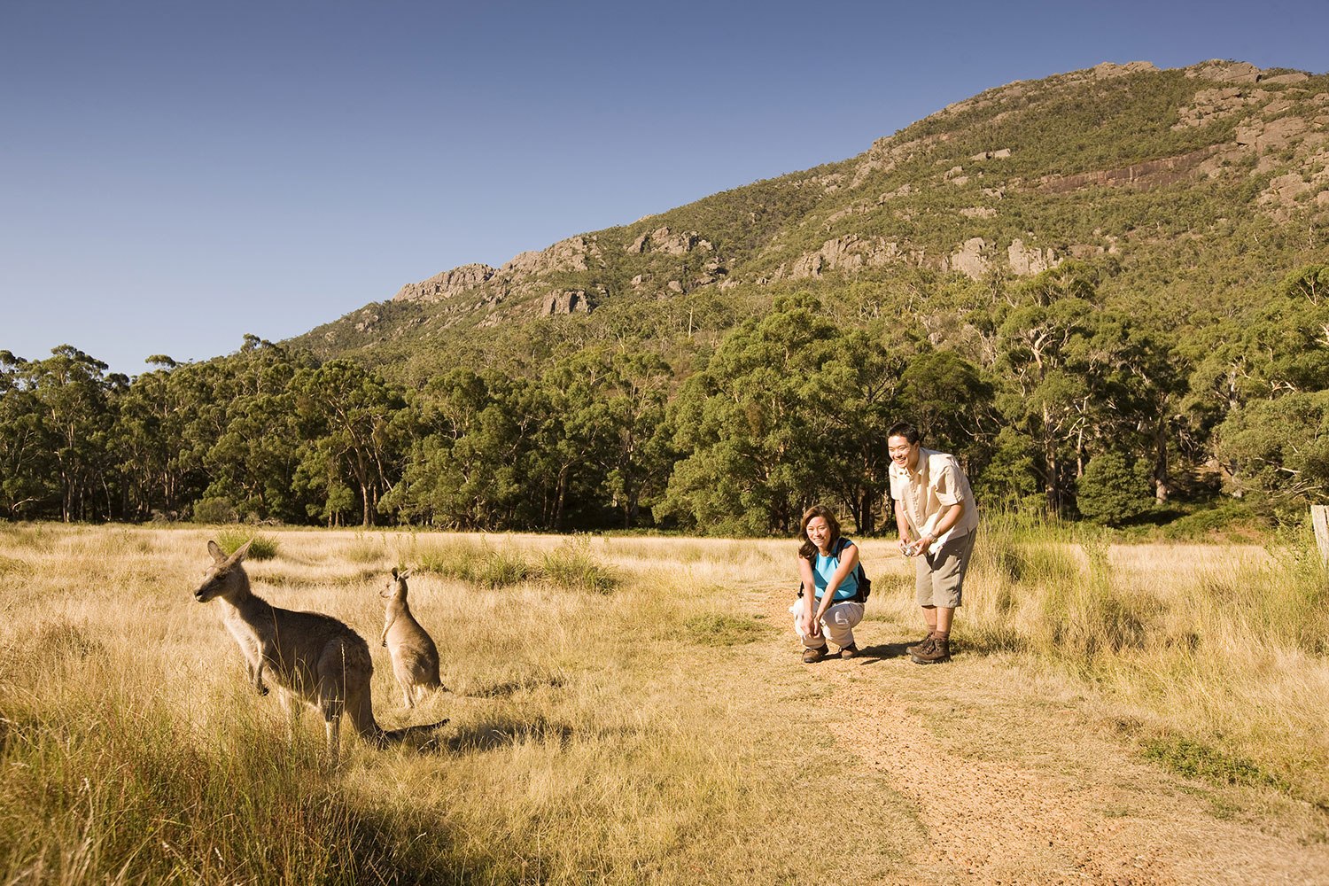 grampians national park tour