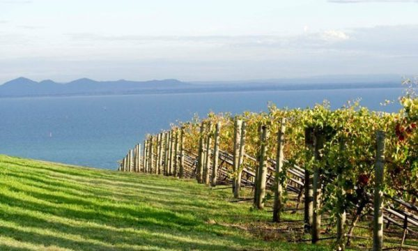 bellarine wine tours