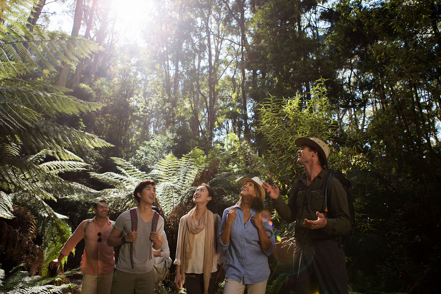 Guided rainforest walk is a step back in prehistoric time.)