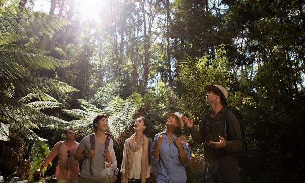 Guided rainforest walk is a step back in prehistoric time.