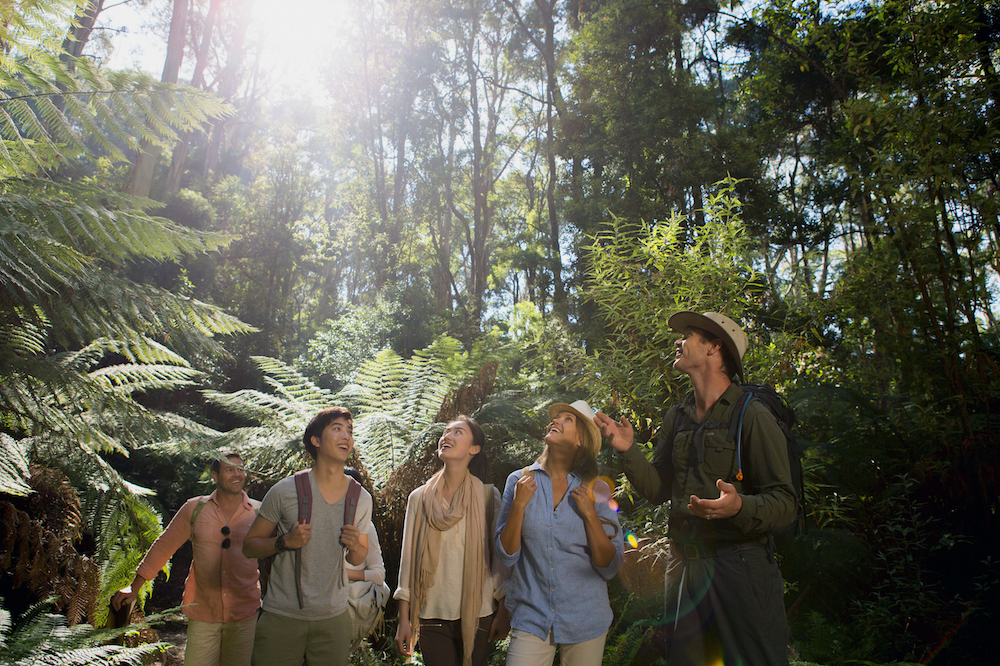 Discover the Otways Rainforest with a guided walk