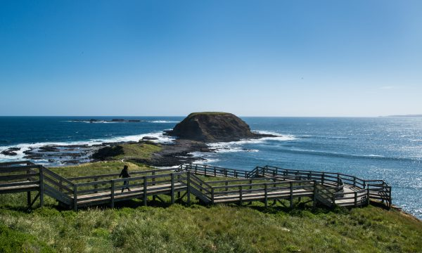 phillip island tour