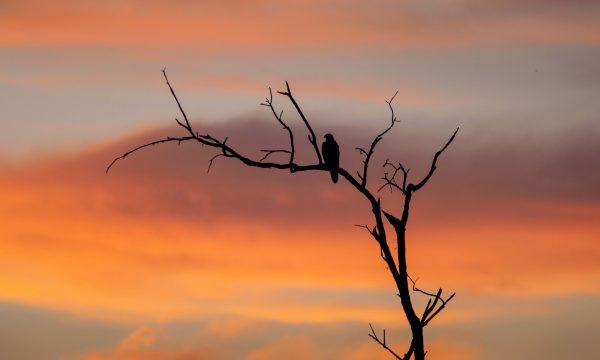 Bird in silhouette on the wetlands.